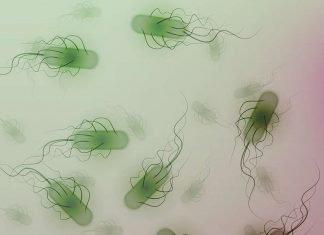 E. coli Symptoms