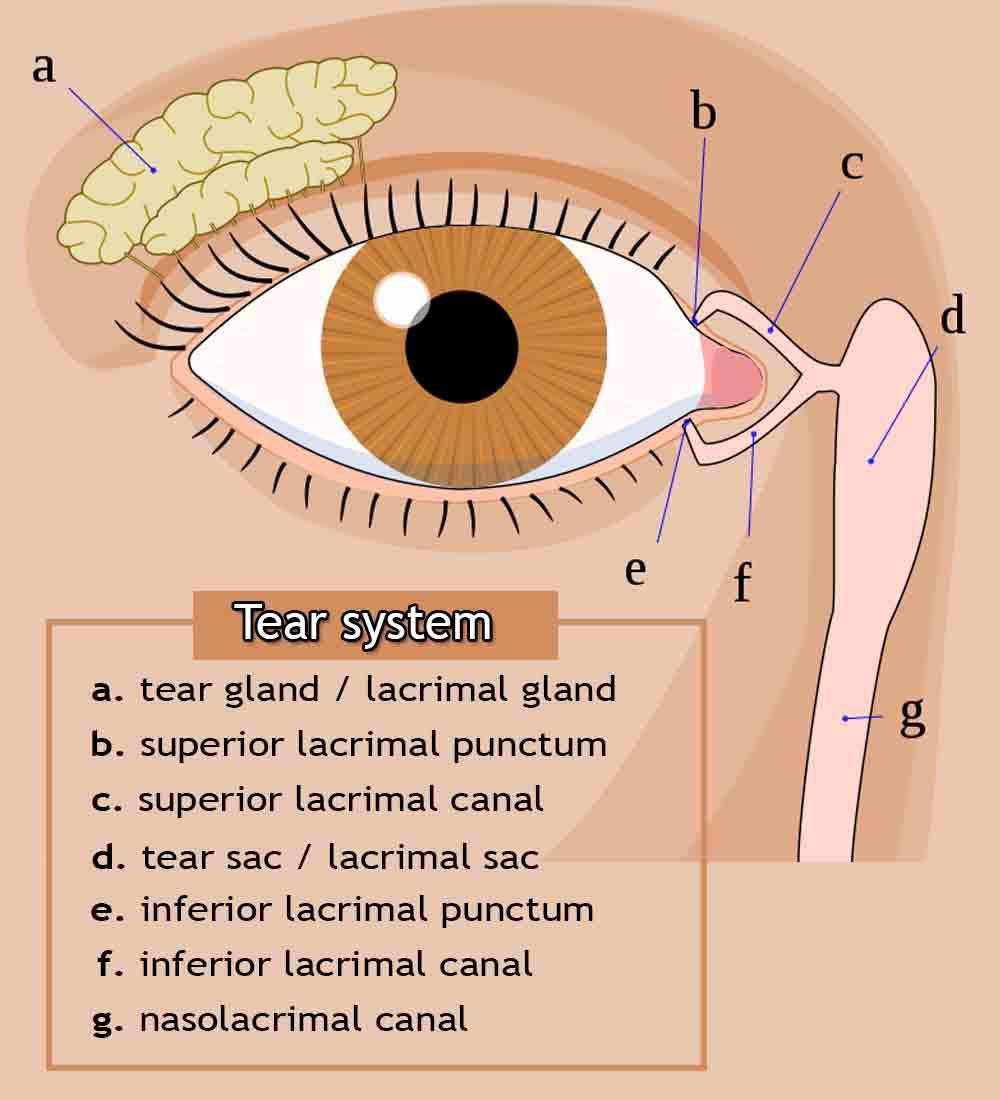 Tear system